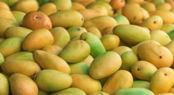 Farmers bring mangoes directly to your table
